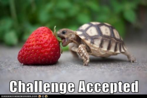 Challenge Accepted Turtle